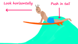 ord-the-tail-of-surfboard
