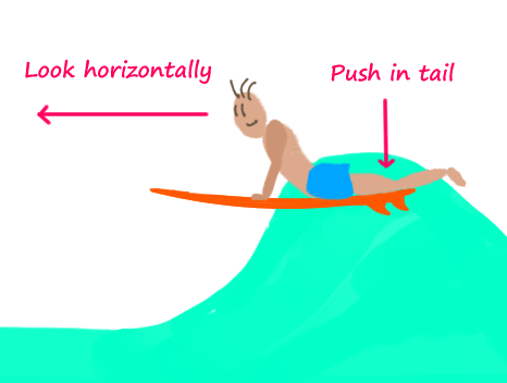 surfing-take-off-push-in-tail-and-look-horizontally-keep-the-surfboard-level